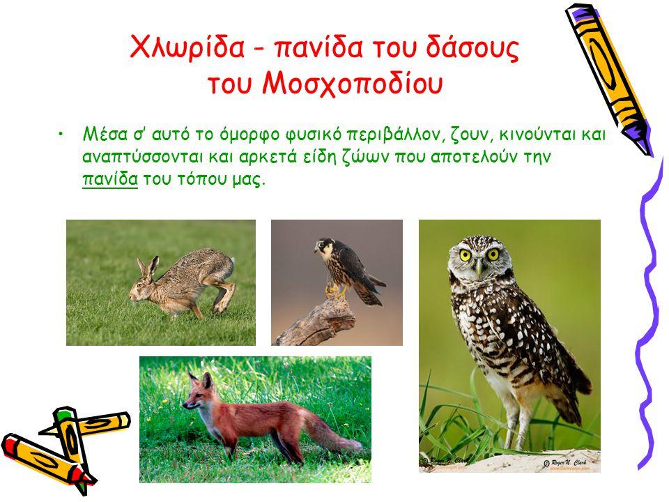 Χλωρίδα - πανίδα του δάσους του Μοσχοποδίου •Μέσα σ' αυτό το όμορφο φυσικό περιβάλλον, ζουν, κινούνται και αναπτύσσονται και αρκετά είδη ζώων που αποτ