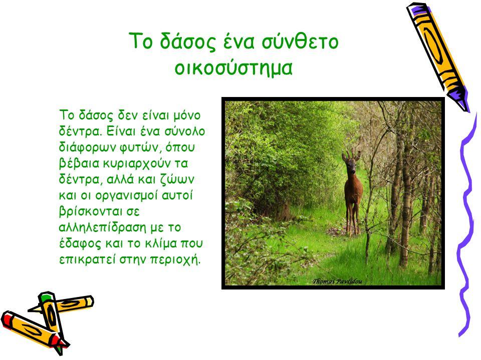 Το δάσος ένα σύνθετο οικοσύστημα Το δάσος δεν είναι μόνο δέντρα. Είναι ένα σύνολο διάφορων φυτών, όπου βέβαια κυριαρχούν τα δέντρα, αλλά και ζώων και