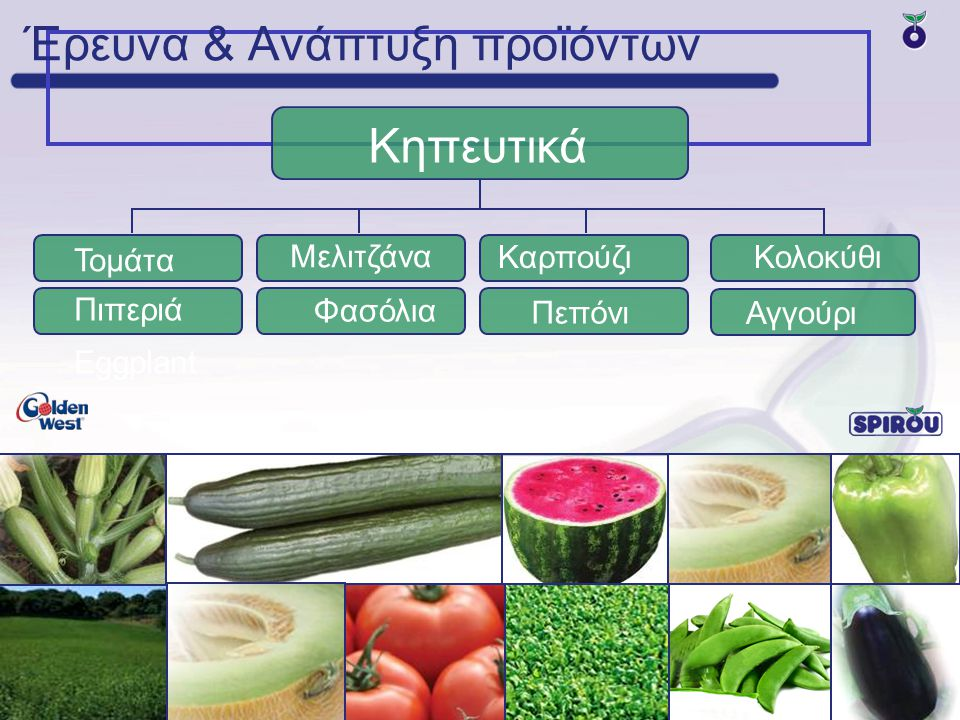 Μελιτζάνα Τομάτα Καρπούζι Έρευνα & Ανάπτυξη προϊόντων Κηπευτικά Φασόλια Πιπεριά Eggplant Πεπόνι Κολοκύθι Αγγούρι
