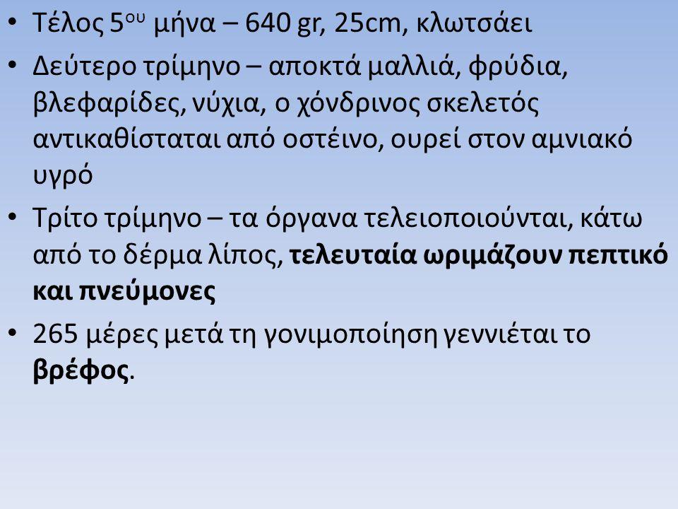 • Τέλος 5 ου μήνα – 640 gr, 25cm, κλωτσάει • Δεύτερο τρίμηνο – αποκτά μαλλιά, φρύδια, βλεφαρίδες, νύχια, ο χόνδρινος σκελετός αντικαθίσταται από οστέινο, ουρεί στον αμνιακό υγρό • Τρίτο τρίμηνο – τα όργανα τελειοποιούνται, κάτω από το δέρμα λίπος, τελευταία ωριμάζουν πεπτικό και πνεύμονες • 265 μέρες μετά τη γονιμοποίηση γεννιέται το βρέφος.