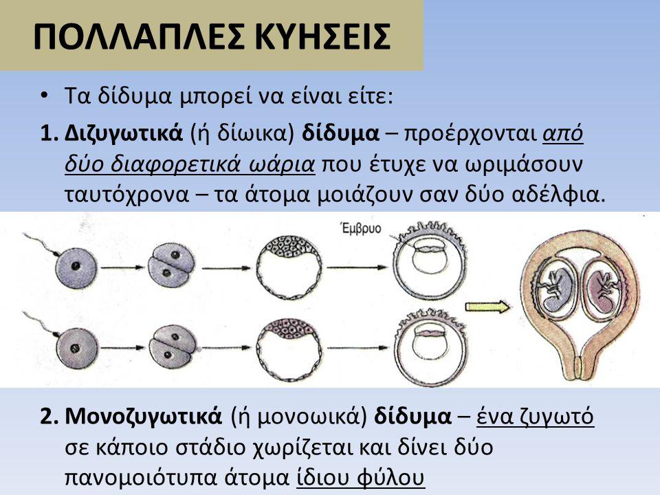 ΠΟΛΛΑΠΛΕΣ ΚΥΗΣΕΙΣ • Τα δίδυμα μπορεί να είναι είτε: 1.Διζυγωτικά (ή δίωικα) δίδυμα – προέρχονται από δύο διαφορετικά ωάρια που έτυχε να ωριμάσουν ταυτ