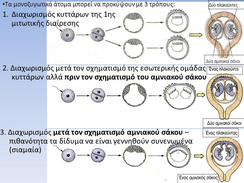 • Τα μονοζυγωτικά άτομα μπορεί να προκύψουν με 3 τρόπους: 1.Διαχωρισμός κυττάρων της 1ης μιτωτικής διαίρεσης 3. Διαχωρισμός μετά τον σχηματισμό αμνιακ