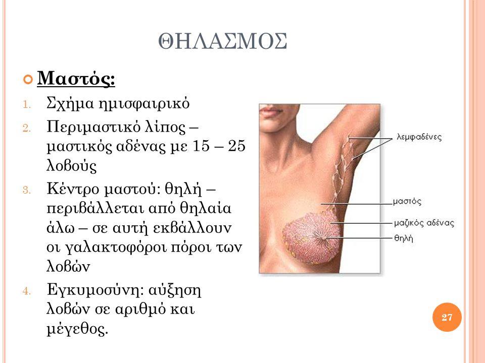 ΘΗΛΑΣΜΟΣ Μαστός: 1. Σχήμα ημισφαιρικό 2. Περιμαστικό λίπος – μαστικός αδένας με 15 – 25 λοβούς 3. Κέντρο μαστού: θηλή – περιβάλλεται από θηλαία άλω –
