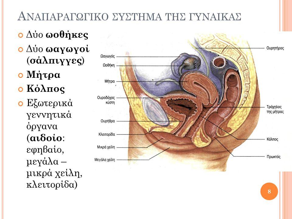 Α ΝΑΠΑΡΑΓΩΓΙΚΟ ΣΥΣΤΗΜΑ ΤΗΣ ΓΥΝΑΙΚΑΣ Δύο ωοθήκες Δύο ωαγωγοί ( σάλπιγγες ) Μήτρα Κόλπος Εξωτερικά γεννητικά όργανα ( αιδοίο : εφηβαίο, μεγάλα – μικρά χ