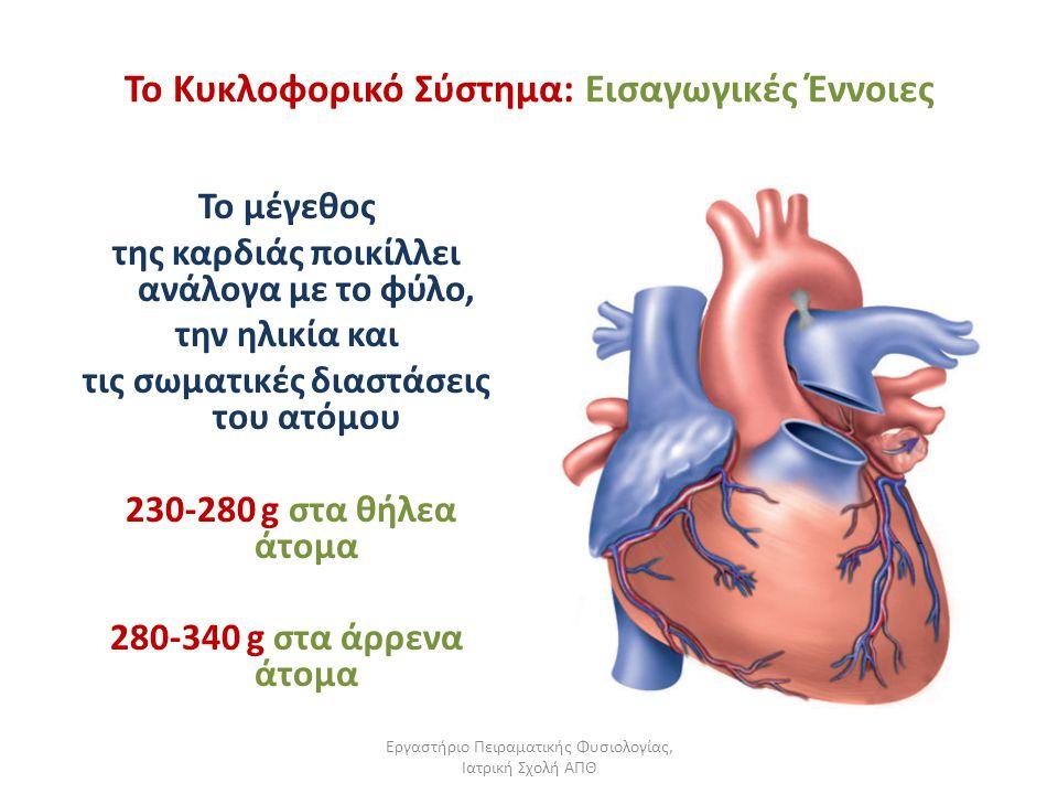 Εργαστήριο Πειραματικής Φυσιολογίας, Ιατρική Σχολή ΑΠΘ Το Κυκλοφορικό Σύστημα: Εισαγωγικές Έννοιες Το μέγεθος της καρδιάς ποικίλλει ανάλογα με το φύλο