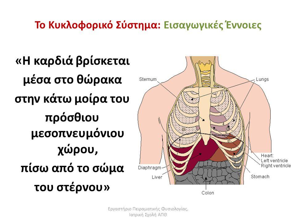 Εργαστήριο Πειραματικής Φυσιολογίας, Ιατρική Σχολή ΑΠΘ Το Κυκλοφορικό Σύστημα: Εισαγωγικές Έννοιες «Η καρδιά βρίσκεται μέσα στο θώρακα στην κάτω μοίρα