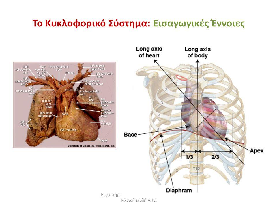 Εργαστήριο Πειραματικής Φυσιολογίας, Ιατρική Σχολή ΑΠΘ Το Κυκλοφορικό Σύστημα: Εισαγωγικές Έννοιες