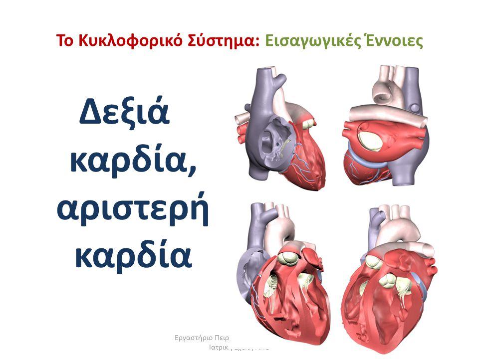 Εργαστήριο Πειραματικής Φυσιολογίας, Ιατρική Σχολή ΑΠΘ Το Κυκλοφορικό Σύστημα: Εισαγωγικές Έννοιες Δεξιά καρδία, αριστερή καρδία