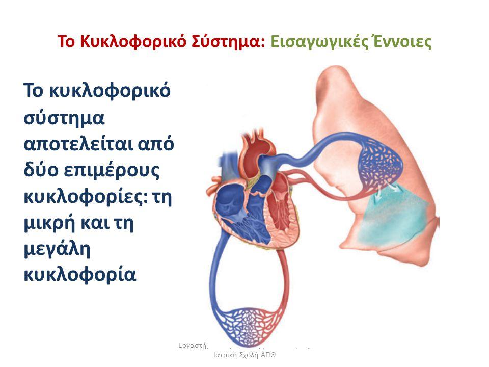 Εργαστήριο Πειραματικής Φυσιολογίας, Ιατρική Σχολή ΑΠΘ Το Κυκλοφορικό Σύστημα: Εισαγωγικές Έννοιες To κυκλοφορικό σύστημα αποτελείται από δύο επιμέρου
