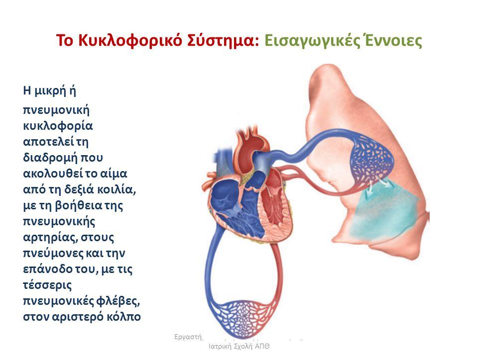 Εργαστήριο Πειραματικής Φυσιολογίας, Ιατρική Σχολή ΑΠΘ Το Κυκλοφορικό Σύστημα: Εισαγωγικές Έννοιες Η μικρή ή πνευμονική κυκλοφορία αποτελεί τη διαδρομ