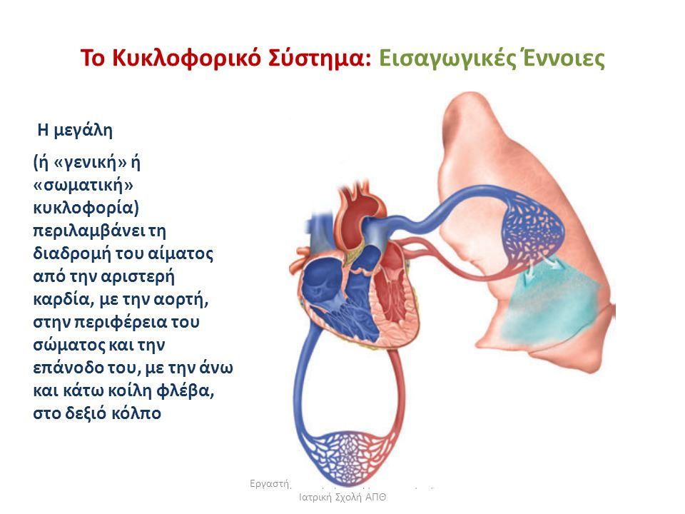 Εργαστήριο Πειραματικής Φυσιολογίας, Ιατρική Σχολή ΑΠΘ Το Κυκλοφορικό Σύστημα: Εισαγωγικές Έννοιες Η μεγάλη (ή «γενική» ή «σωματική» κυκλοφορία) περιλ
