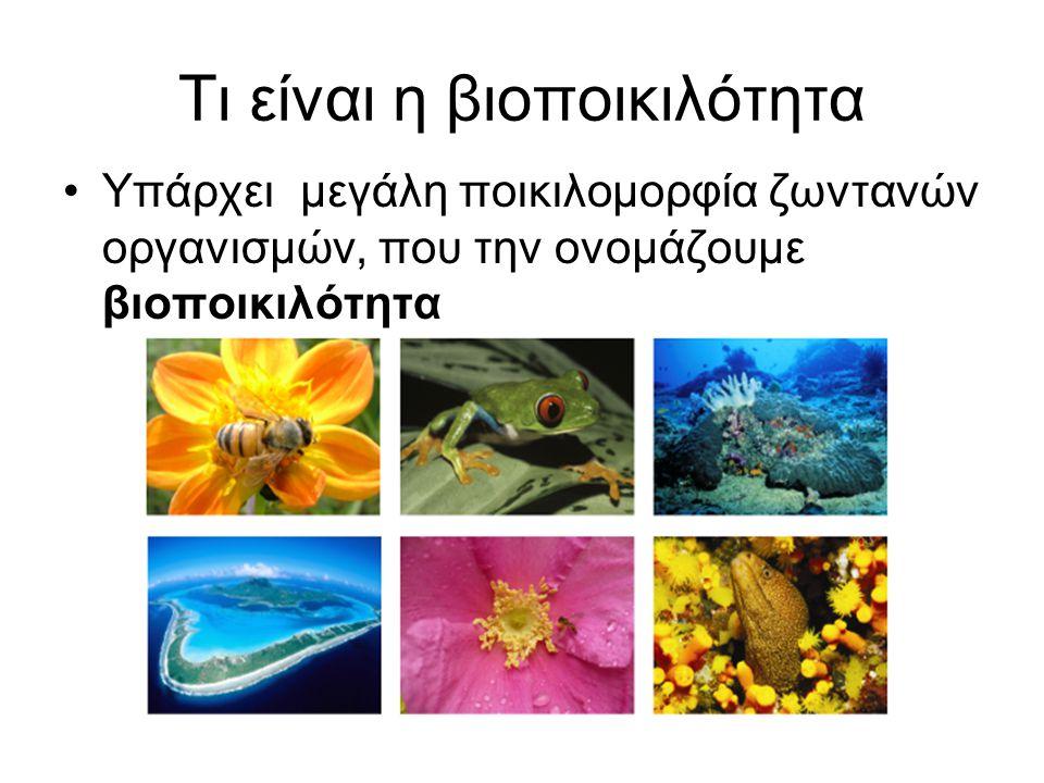 Τι είναι η βιοποικιλότητα •Υπάρχει μεγάλη ποικιλομορφία ζωντανών οργανισμών, που την ονομάζουμε βιοποικιλότητα
