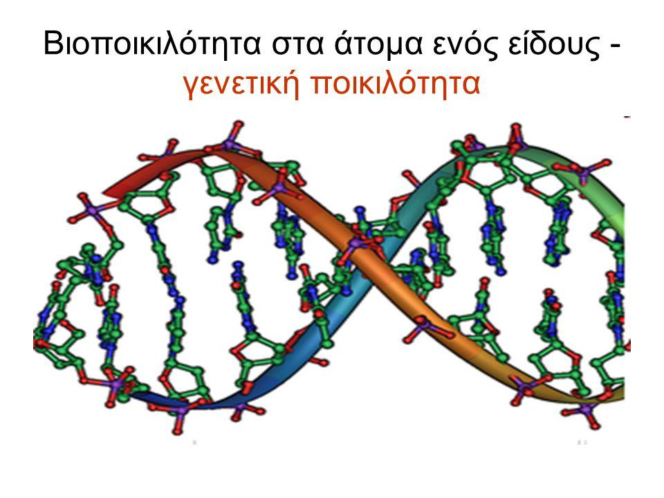 Βιοποικιλότητα στα άτομα ενός είδους - γενετική ποικιλότητα