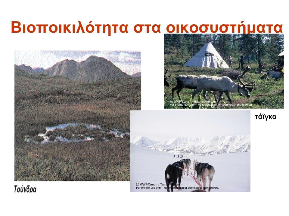 Βιοποικιλότητα στα οικοσυστήματα τάϊγκα