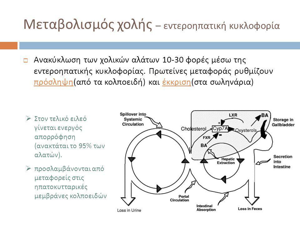 Μεταβολισμός χολής – εντεροηπατική κυκλοφορία  Ανακύκλωση των χολικών αλάτων 10-30 φορές μέσω της εντεροηπατικής κυκλοφορίας. Πρωτείνες μεταφοράς ρυθ