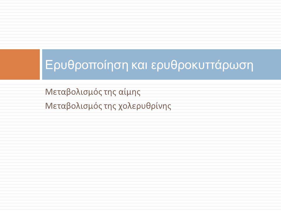 Μεταβολισμός της αίμης Μεταβολισμός της χολερυθρίνης Ερυθροποίηση και ερυθροκυττάρωση