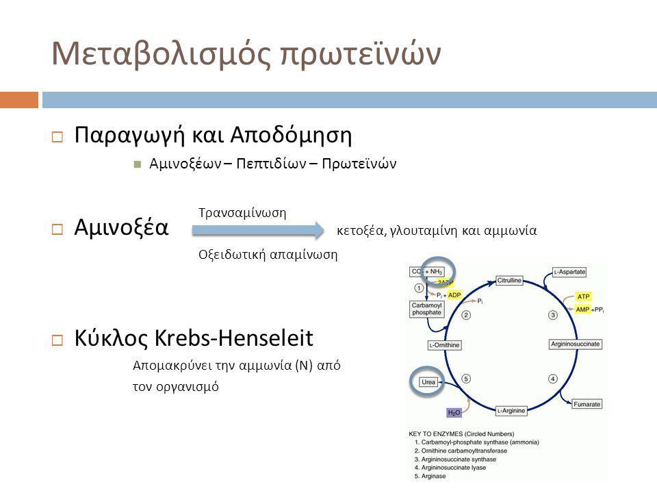 Μεταβολισμός πρωτεϊνών  Παραγωγή και Αποδόμηση  Αμινοξέων – Πεπτιδίων – Πρωτεϊνών  Αμινοξέα κετοξέα, γλουταμίνη και αμμωνία  Κύκλος Krebs-Henseleit Απομακρύνει την αμμωνία (Ν) από τον οργανισμό Τρανσαμίνωση Οξειδωτική απαμίνωση