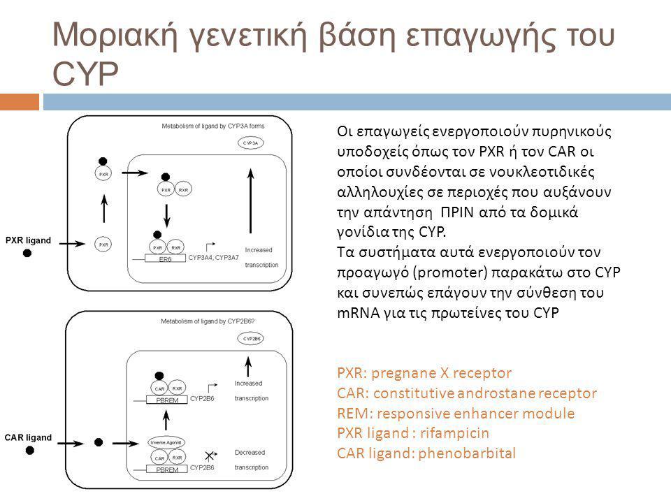 Μοριακή γενετική βάση επαγωγής του CYP Οι επαγωγείς ενεργοποιούν πυρηνικούς υποδοχείς όπως τον PXR ή τον CAR οι οποίοι συνδέονται σε νουκλεοτιδικές αλληλουχίες σε περιοχές που αυξάνουν την απάντηση ΠΡΙΝ από τα δομικά γονίδια της CYP.