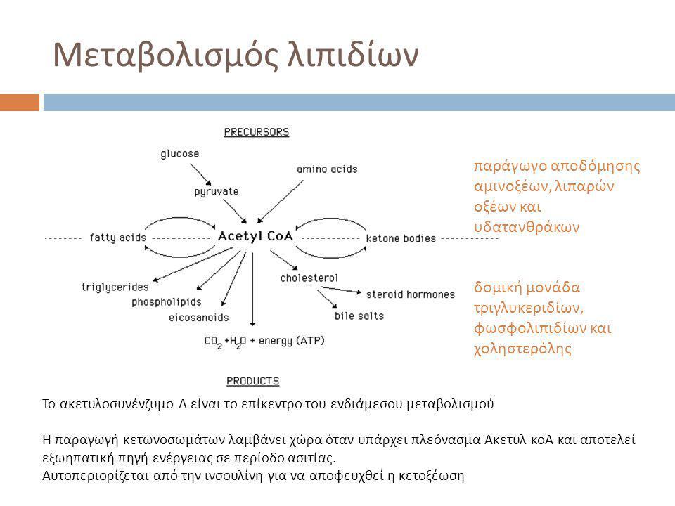 Μεταβολισμός λιπιδίων Το ακετυλοσυνένζυμο Α είναι το επίκεντρο του ενδιάμεσου μεταβολισμού Η παραγωγή κετωνοσωμάτων λαμβάνει χώρα όταν υπάρχει πλεόνασμα Ακετυλ-κοΑ και αποτελεί εξωηπατική πηγή ενέργειας σε περίοδο ασιτίας.