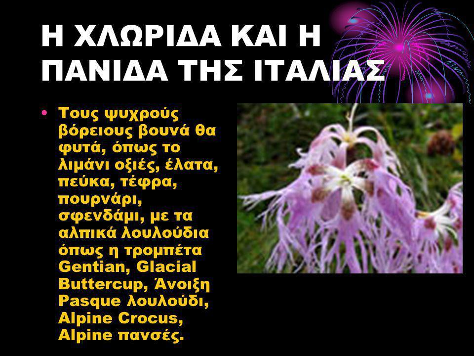 Η ΧΛΩΡΙΔΑ ΚΑΙ Η ΠΑΝΙΔΑ ΤΗΣ ΙΤΑΛΙΑΣ •Τους ψυχρούς βόρειους βουνά θα φυτά, όπως το λιμάνι οξιές, έλατα, πεύκα, τέφρα, πουρνάρι, σφενδάμι, με τα αλπικά λουλούδια όπως η τρομπέτα Gentian, Glacial Buttercup, Άνοιξη Pasque λουλούδι, Alpine Crocus, Alpine πανσές.
