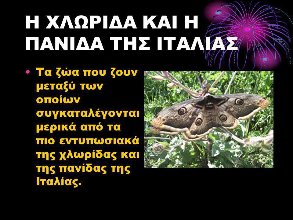 Η ΧΛΩΡΙΔΑ ΚΑΙ Η ΠΑΝΙΔΑ ΤΗΣ ΙΤΑΛΙΑΣ •Τα ζώα που ζουν μεταξύ των οποίων συγκαταλέγονται μερικά από τα πιο εντυπωσιακά της χλωρίδας και της πανίδας της Ι