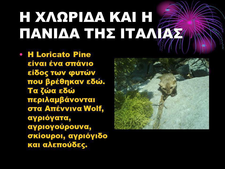 Η ΧΛΩΡΙΔΑ ΚΑΙ Η ΠΑΝΙΔΑ ΤΗΣ ΙΤΑΛΙΑΣ •Η Loricato Pine είναι ένα σπάνιο είδος των φυτών που βρέθηκαν εδώ. Τα ζώα εδώ περιλαμβάνονται στα Απέννινα Wolf, α