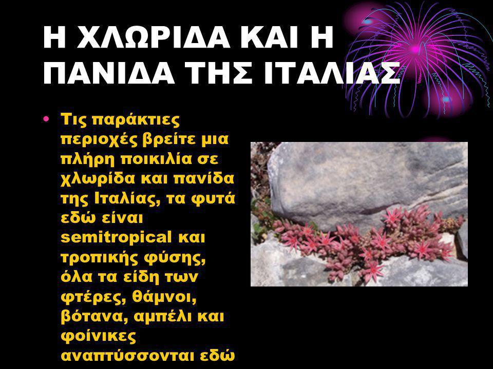 Η ΧΛΩΡΙΔΑ ΚΑΙ Η ΠΑΝΙΔΑ ΤΗΣ ΙΤΑΛΙΑΣ •Τις παράκτιες περιοχές βρείτε μια πλήρη ποικιλία σε χλωρίδα και πανίδα της Ιταλίας, τα φυτά εδώ είναι semitropical και τροπικής φύσης, όλα τα είδη των φτέρες, θάμνοι, βότανα, αμπέλι και φοίνικες αναπτύσσονται εδώ