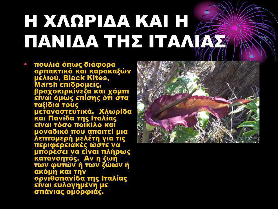 Η ΧΛΩΡΙΔΑ ΚΑΙ Η ΠΑΝΙΔΑ ΤΗΣ ΙΤΑΛΙΑΣ •πουλιά όπως διάφορα αρπακτικά και καρακαξών μελιού, Black Kites, Marsh επιδρομείς, βραχοκιρκίνεζα και χόμπι είναι