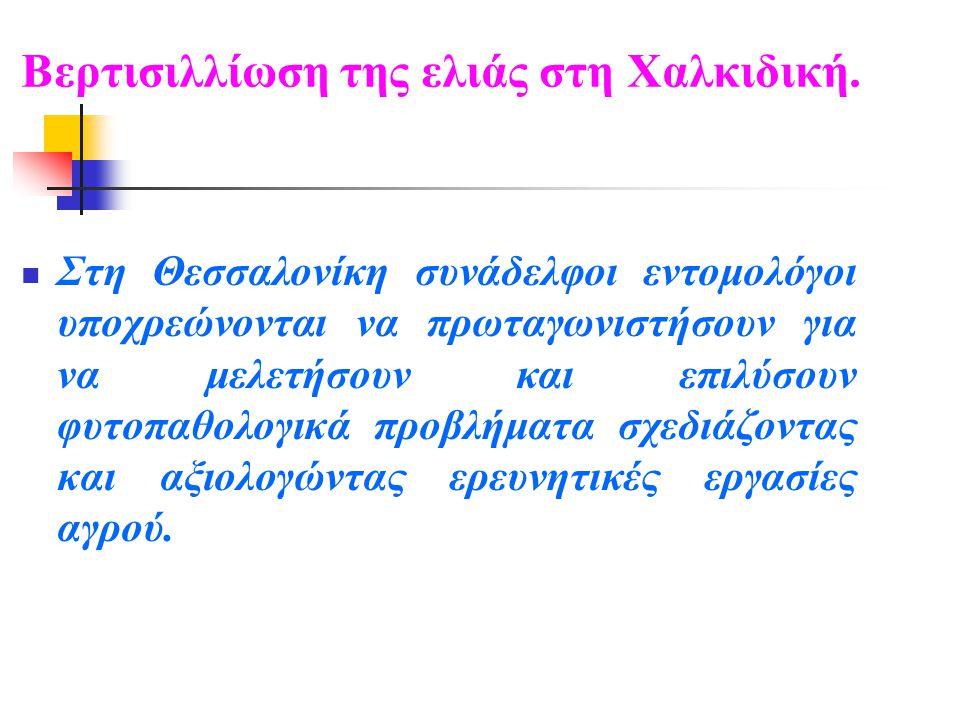 Βερτισιλλίωση της ελιάς στη Χαλκιδική.  Στη Θεσσαλονίκη συνάδελφοι εντομολόγοι υποχρεώνονται να πρωταγωνιστήσουν για να μελετήσουν και επιλύσουν φυτο
