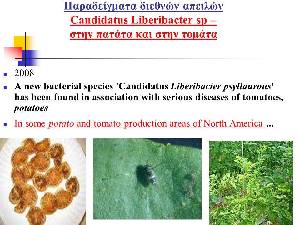 Παραδείγματα διεθνών απειλών Candidatus Liberibacter sp – στην πατάτα και στην τομάτα Candidatus Liberibacter sp – στην πατάτα και στην τομάτα  2008