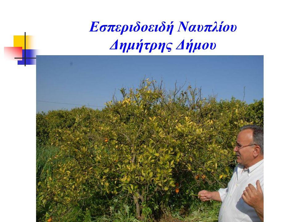 Εσπεριδοειδή Ναυπλίου Δημήτρης Δήμου
