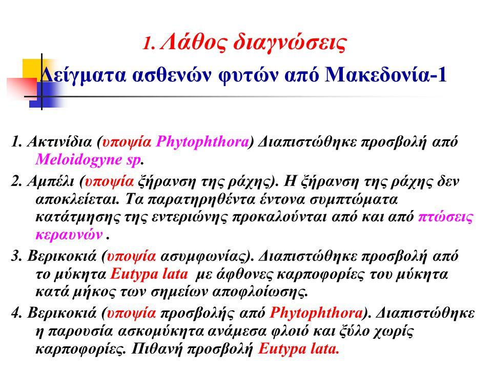 1. Λάθος διαγνώσεις Δείγματα ασθενών φυτών από Μακεδονία-1 1. Ακτινίδια (υποψία Phytophthora) Διαπιστώθηκε προσβολή από Meloidogyne sp. 2. Αμπέλι (υπο