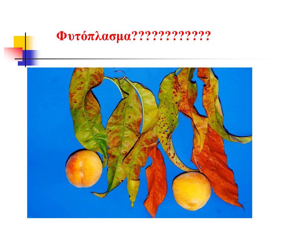 Φυτόπλασμα????????????
