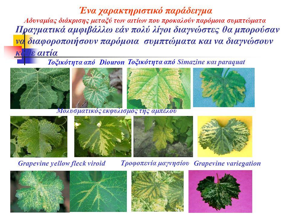 Πραγματικά αμφιβάλλω εάν πολύ λίγοι διαγνώστες θα μπορούσαν να διαφοροποιήσουν παρόμοια συμπτώματα και να διαγνώσουν κάθε αιτία Τοξικότητα από Diouron Τοξικότητα από Simazine και paraquat Τροφοπενία μαγνησίου Μολυσματικός εκφυλισμός της αμπέλου Grapevine yellow fleck viroidGrapevine variegation Ένα χαρακτηριστικό παράδειγμα Αδυναμίας διάκρισης μεταξύ των αιτίων που προκαλούν παρόμοια συμπτώματα