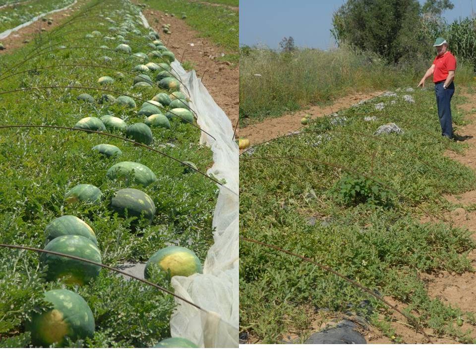 Αλλαγές στο ύψος αλλά και στη διαδικασία των επιδοτήσεων από ΕΕ  Επέφεραν μείωση ορισμένων σημαντικών καλλιεργειών της χώρα μας όπως του βαμβακιού και σε αναζήτηση εναλλακτικών καλλιεργειών.
