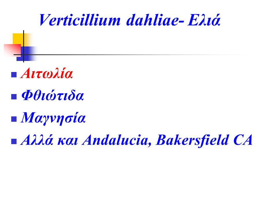 Verticillium dahliae- Ελιά  Αιτωλία  Φθιώτιδα  Μαγνησία  Αλλά και Andalucia, Bakersfield CA