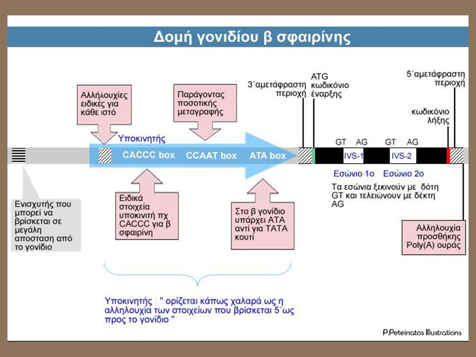 Πώς γίνεται η διάγνωση της β- θαλασσαιμίας ; •Μειωμένος ερυθροκυτταρικός όγκος •Υψηλές ποσότητες HbA2 •Υψηλές ποσότητες HbF ( η γ σφαιρίνη έχει υψηλότερη συγγένεια με το οξυγόνο και το δεσμεύει πιο εύκολα αλλά το αποδεσμεύει δυσκολότερα )