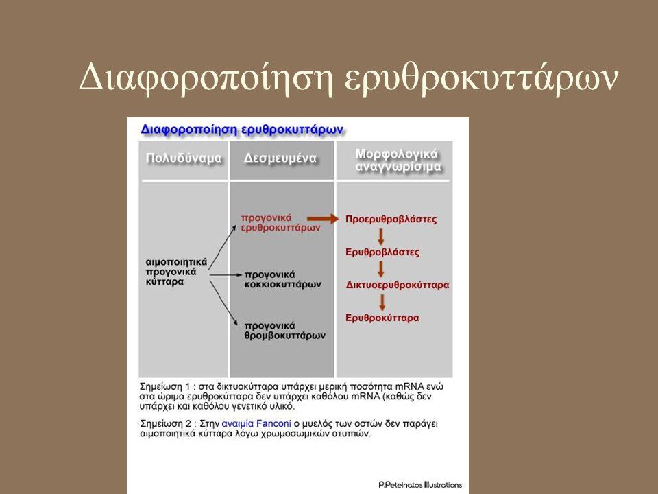 Αντιμετώπιση κλινικών συμπτωμάτων •Σπληνεκτομή •Μεταγγίσεις ή φορητή συσκευή παροχής δισφεριοξαμίνης για χηλική δέσμευση Fe •Μεταμόσχευση μυελού των οστών (υψηλός κίνδυνος θνησιμότητας) •Γονιδιακή θεραπεία β-σφαιρίνης σε μυελό των οστών