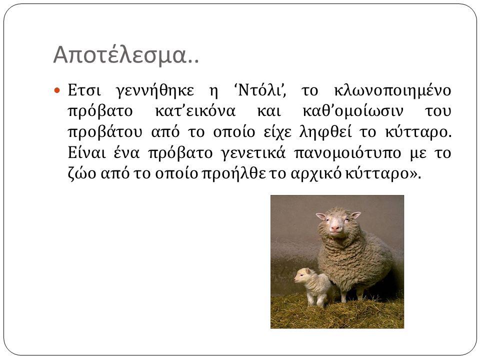 Αποτέλεσμα..  Ετσι γεννήθηκε η ' Ντόλι ', το κλωνοποιημένο πρόβατο κατ ' εικόνα και καθ ' ομοίωσιν του προβάτου από το οποίο είχε ληφθεί το κύτταρο.