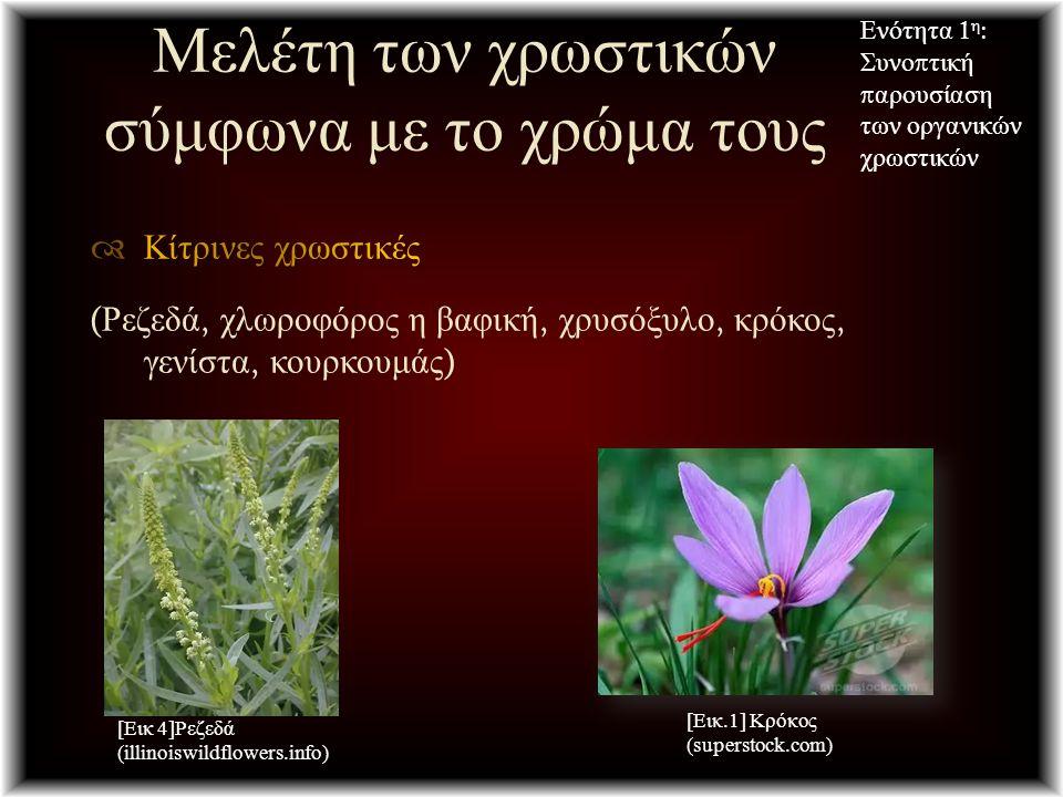 Μελέτη των χρωστικών σύμφωνα με το χρώμα τους Ενότητα 1 η : Συνο π τική π αρουσίαση των οργανικών χρωστικών [Εικ 4]Ρεζεδά (illinoiswildflowers.info) [