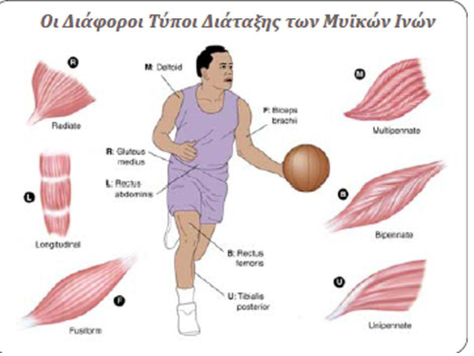 Προδιαθεσικοί παράγοντες • Εξωγενείς: 1.τύπος προπόνησης (ανεπαρκής προθέρμανση, υπερκόπωση, κακή τεχνική, προηγούμενος τραυματισμός) 2.Εξοπλισμός 3.Επιφάνεια άσκησης