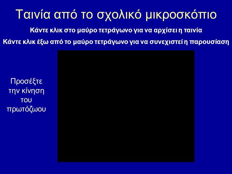 Κάντε κλικ στo μαύρο τετράγωνο για να αρχίσει η ταινία Κάντε κλικ έξω από το μαύρο τετράγωνο για να συνεχιστεί η παρουσίαση Προσέξτε την κίνηση των πρωτόζωων