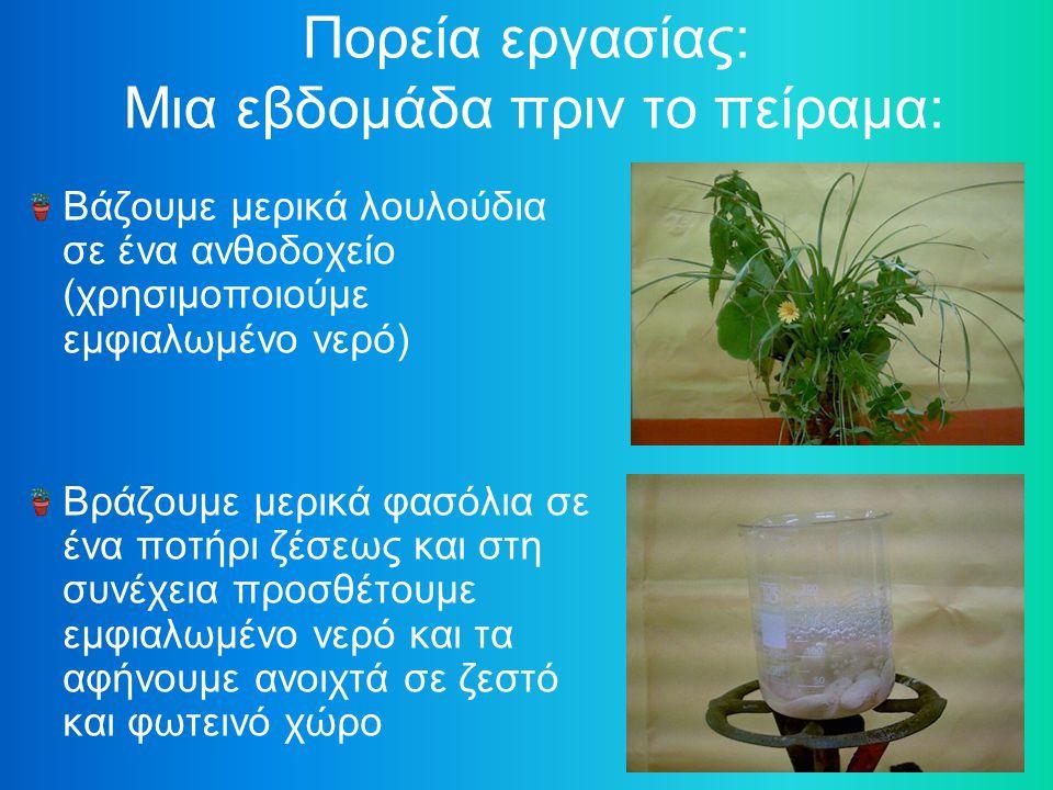 Πορεία εργασίας: Μια εβδομάδα πριν το πείραμα: Βάζουμε μερικά λουλούδια σε ένα ανθοδοχείο (χρησιμοποιούμε εμφιαλωμένο νερό) Βράζουμε μερικά φασόλια σε