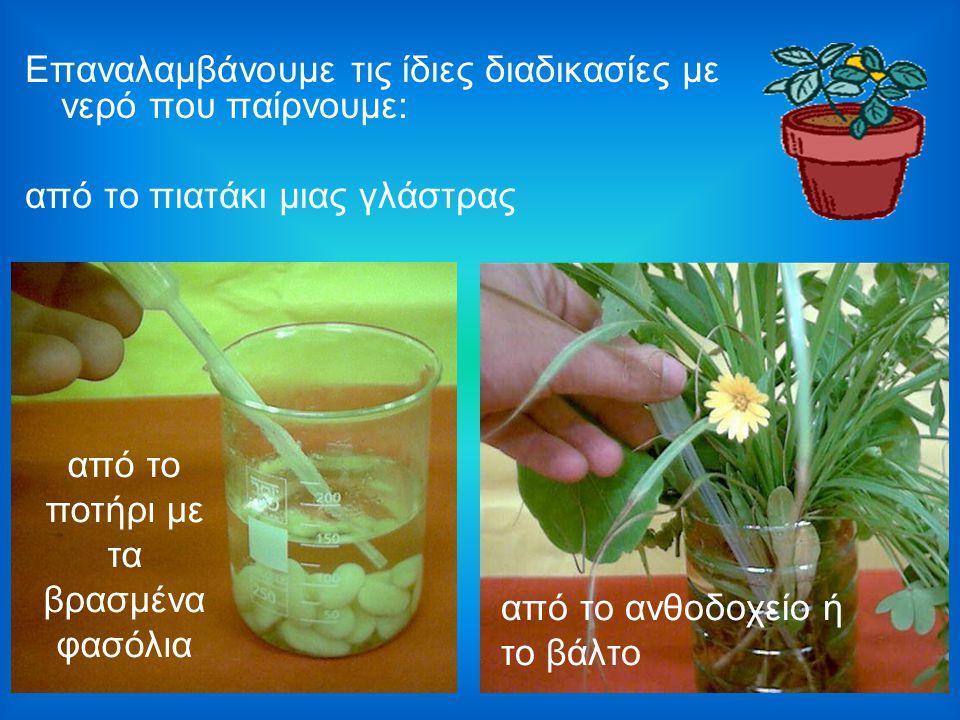 Επαναλαμβάνουμε τις ίδιες διαδικασίες με νερό που παίρνουμε: από το πιατάκι μιας γλάστρας από το ανθοδοχείο ή το βάλτο από το ποτήρι με τα βρασμένα φα