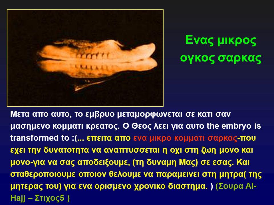 Ενας μικρος ογκος σαρκας Μετα απο αυτο, το εμβρυο μεταμορφωνεται σε κατι σαν μασημενο κομματι κρεατος.