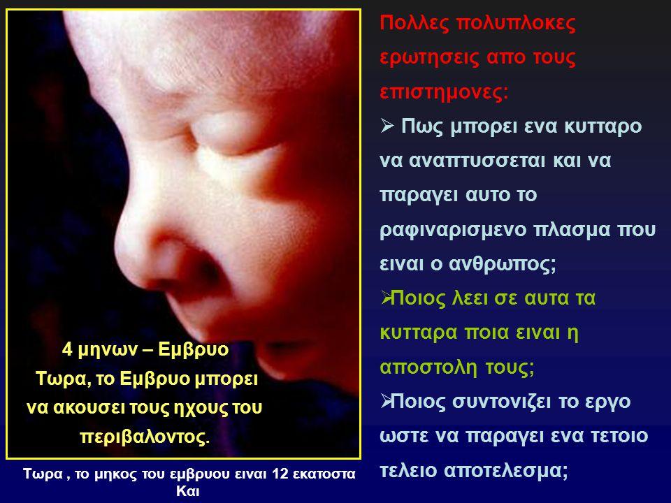 4 μηνων – Εμβρυο Τωρα, το Εμβρυο μπορει να ακουσει τους ηχους του περιβαλοντος.