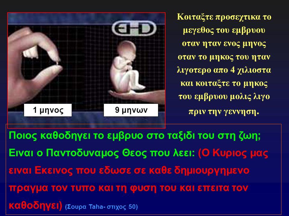 9 μηνων1 μηνος Κοιταξτε προσεχτικα το μεγεθος του εμβρυου οταν ηταν ενος μηνος οταν το μηκος του ηταν λιγοτερο απο 4 χιλιοστα και κοιταξτε το μηκος του εμβρυου μολις λιγο πριν την γεννηση.
