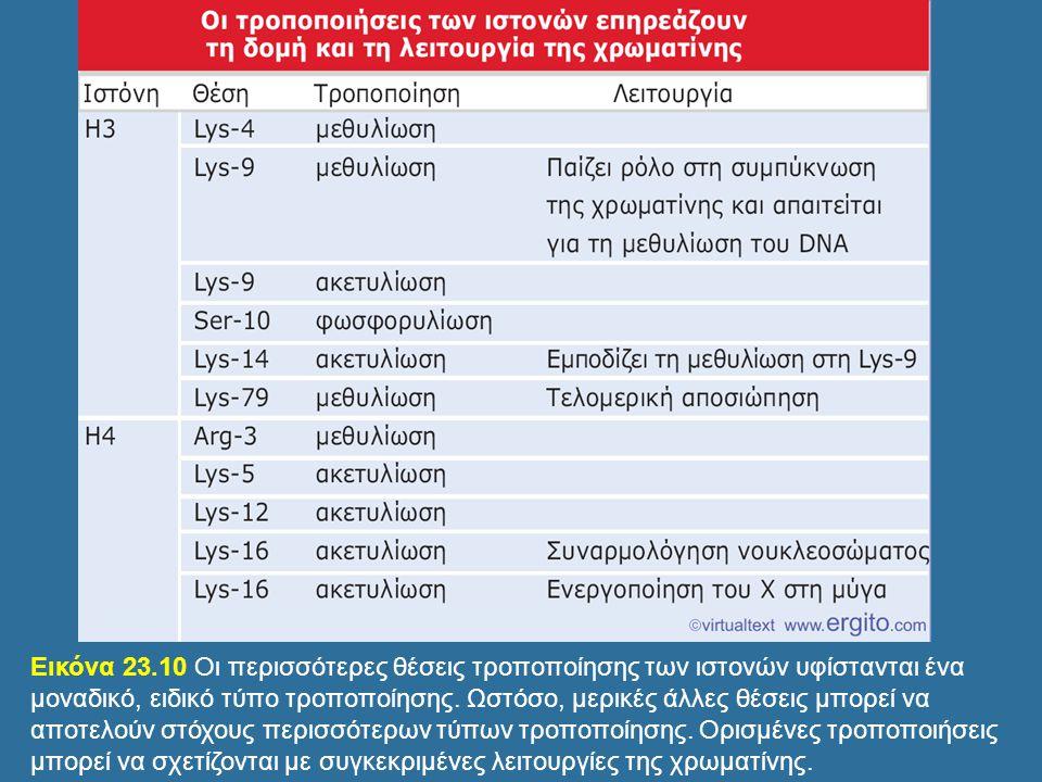 Genes VIII - Ακαδημαϊκές Εκδόσεις 2004 Εικόνα 23.10 Οι περισσότερες θέσεις τροποποίησης των ιστονών υφίστανται ένα μοναδικό, ειδικό τύπο τροποποίησης.