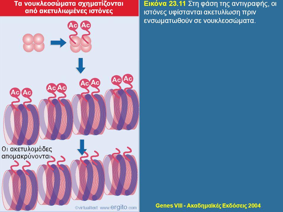 Genes VIII - Ακαδημαϊκές Εκδόσεις 2004 Εικόνα 23.11 Στη φάση της αντιγραφής, οι ιστόνες υφίστανται ακετυλίωση πριν ενσωματωθούν σε νουκλεοσώματα.