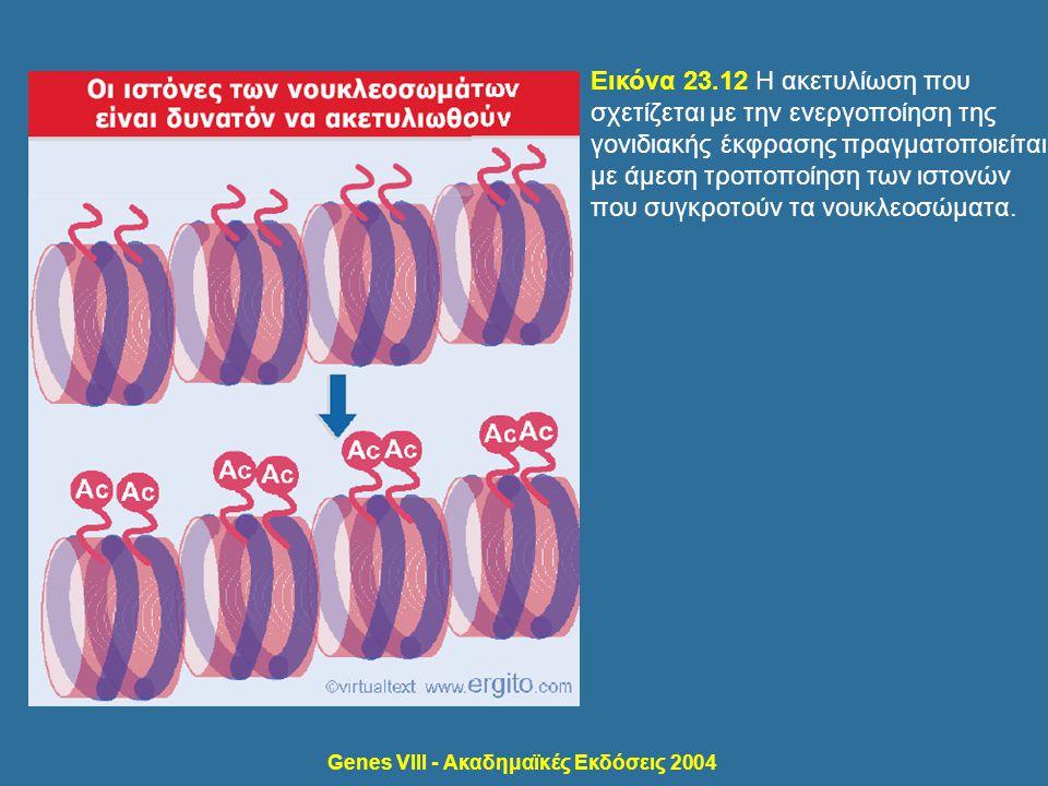 Genes VIII - Ακαδημαϊκές Εκδόσεις 2004 Εικόνα 23.12 Η ακετυλίωση που σχετίζεται με την ενεργοποίηση της γονιδιακής έκφρασης πραγματοποιείται με άμεση